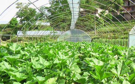 晋中和顺县:蔬菜大棚里的梦想